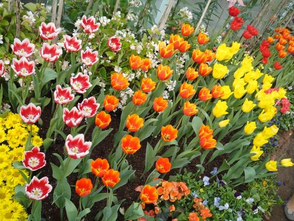 Thaiguide   billeder   blomster park chiang mai åben til 14. februar